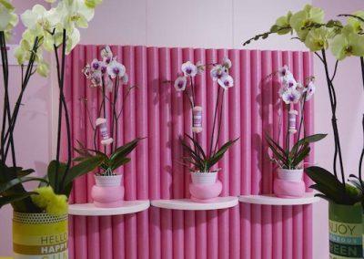 Sion Flower Trials 3